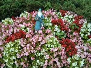 Gnome Garden 800 px